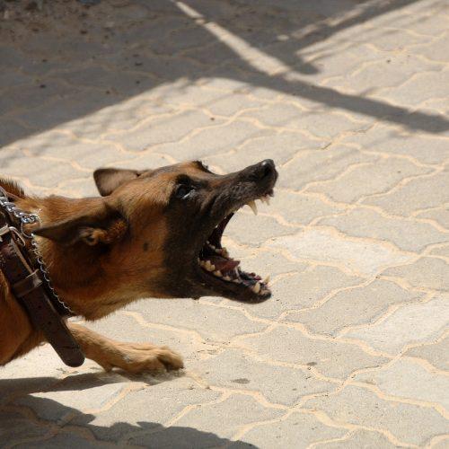 Experto en agresividad canina, miedos y problemas de conducta en Sevilla