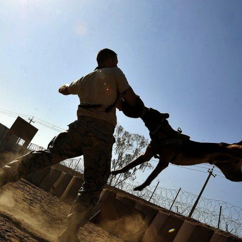 Clases de adiestramiento en grupo y deportes caninos en Sevilla