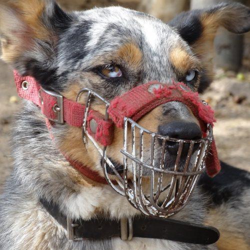 Rehabilitación de perros con problemas de agresividad y miedos en Sevilla