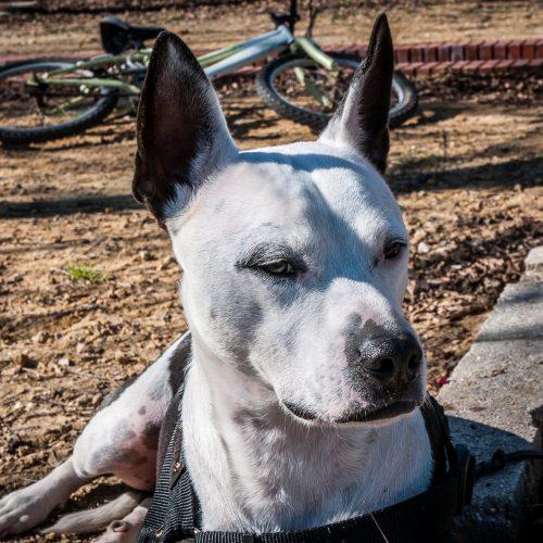 Adiestramiento canino y educación canina con refuerzo positivo en Sevilla