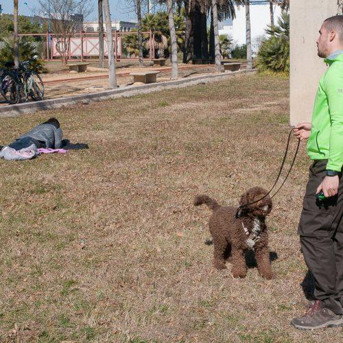 Adiestramiento canino, educación canina y cursos presenciales en Sevilla