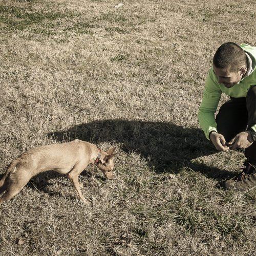 Clases de socialización de cachorros y gestión básica en Sevilla
